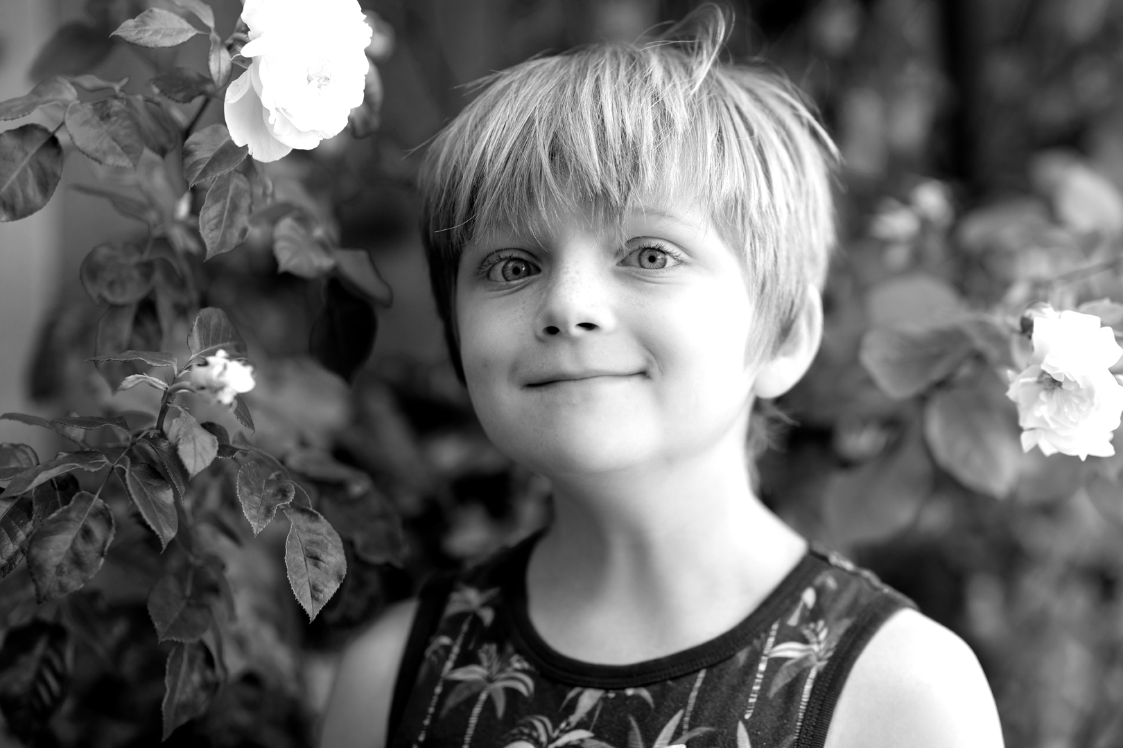 A boy in front of a rose hedge.